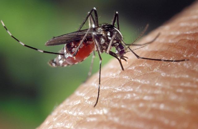 komár na kůži