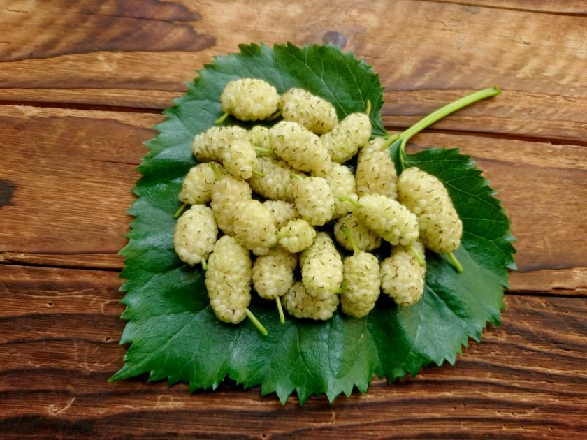 plody morušovníku